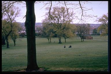 A picture down the gentle grass slope in a park towards a line of trees with the city in the background