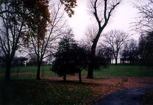 A picture of parkland with trees